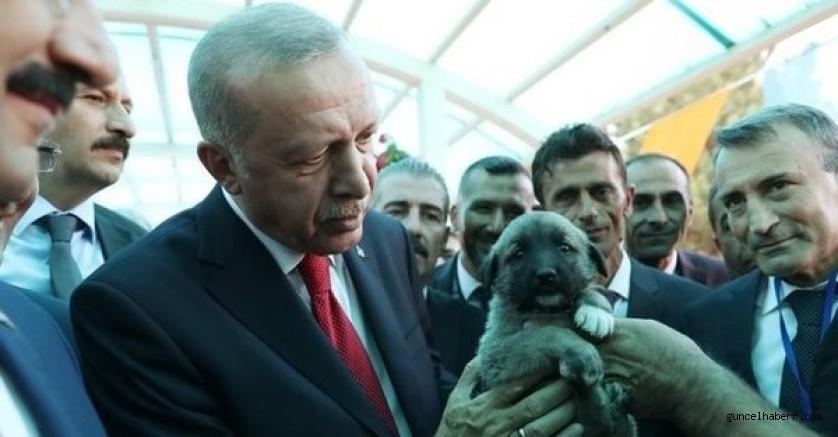Cumhurbaşkanı Erdoğan'dan Hayvan Hakları Yasası talimatı!